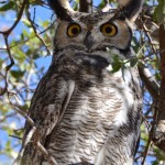 "With opinions from 30 million reviewers on TripAdvisor, I'd hope there would be a couple with similar travel tastes. Or is that possible? ""Whoooo's Watching You? Photo courtesy Gilbert Anderson."