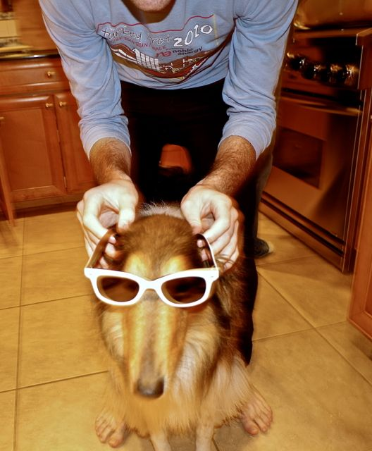 It's always a good idea to introduce the dog to the idea of wearing sunglasses, in order to avoid outright rejection.