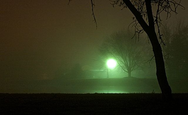 Foggy Night with Tree