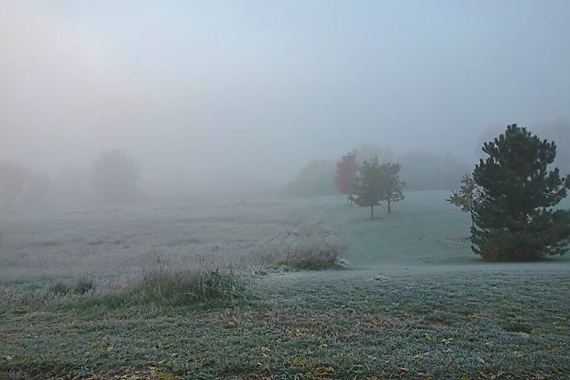 Morning fog on grass.