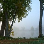 Trees with foggy lake in background.