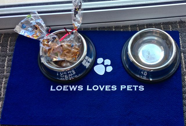 There are many pet friendly destinations worldwide. Pets like to go along on vacation.