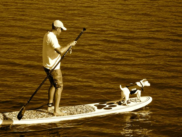 Rocky paddleboarding. Leaving pets at home while on vacation isn't always necessary anymore.