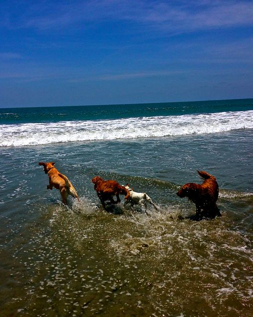 A dog's dream vacation. You don't have to leave your pets at home while you're on vacation.