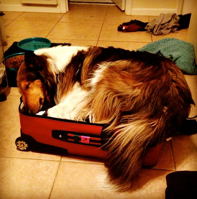 My blog post: Rocky's Road Trip. Pets know what suitcases mean. It means we're going on vacation without them.