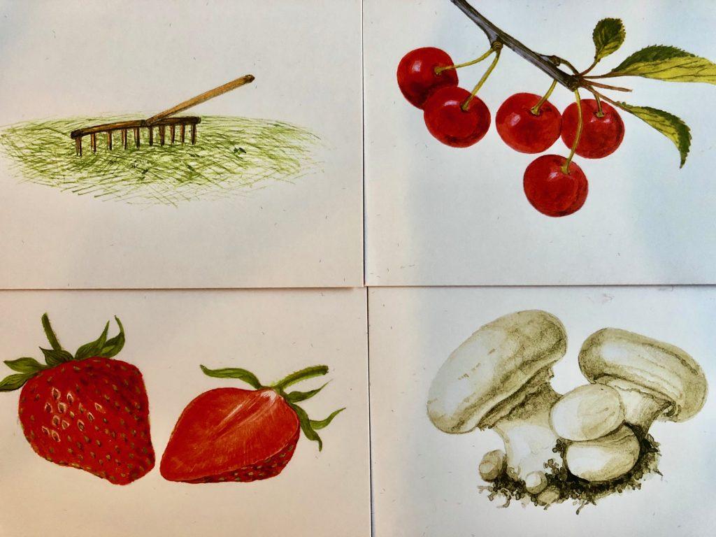 Four aroma cards: hay, cherries, mushrooms, strawberries